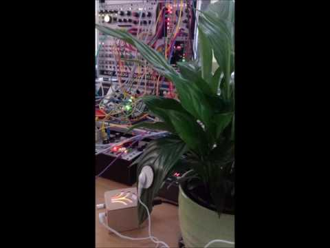 'As One' - MIDI sprout collective consciousness eurorack meditation