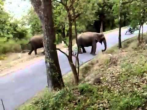Elephant Attack on Marayur   Munnar @ Shanavas Karimattam