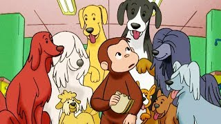 Curious George 🐵 Curious George, Dog Counter 🐵Full Episode 🐵 HD 🐵 Cartoons For Children