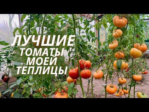 Эти томаты я буду высаживать ВСЕГДА. Лучшие томаты моей теплицы.