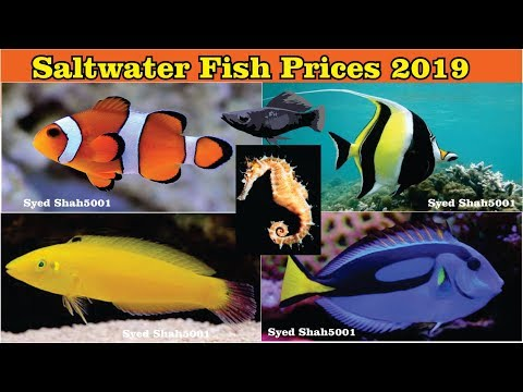 Marine Saltwater Fish Prices In India With Name's 2019 Prices #Marine Fishes #Saltwater Fish
