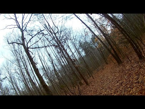 An Awesome Flight and an Attempt Through the Woods