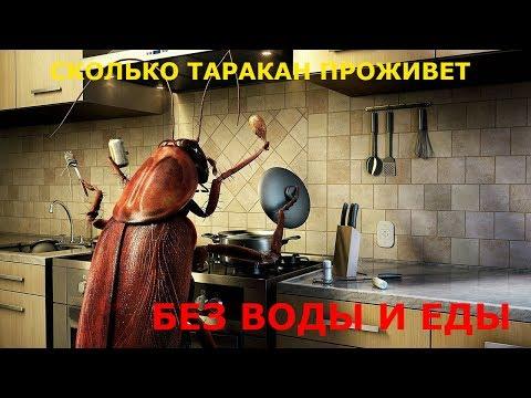 Сколько таракан проживет без воды и еды.