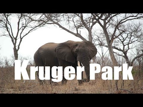 A Safari in the Kruger Park in South Africa, long version | Canon HD | Virtual Trip