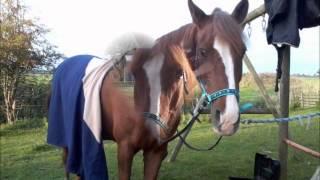 Jasper- Ein Pferd erzählt seine Geschichte ♥