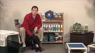 Maryland Dog Training   Puppy Training Prevention Tips