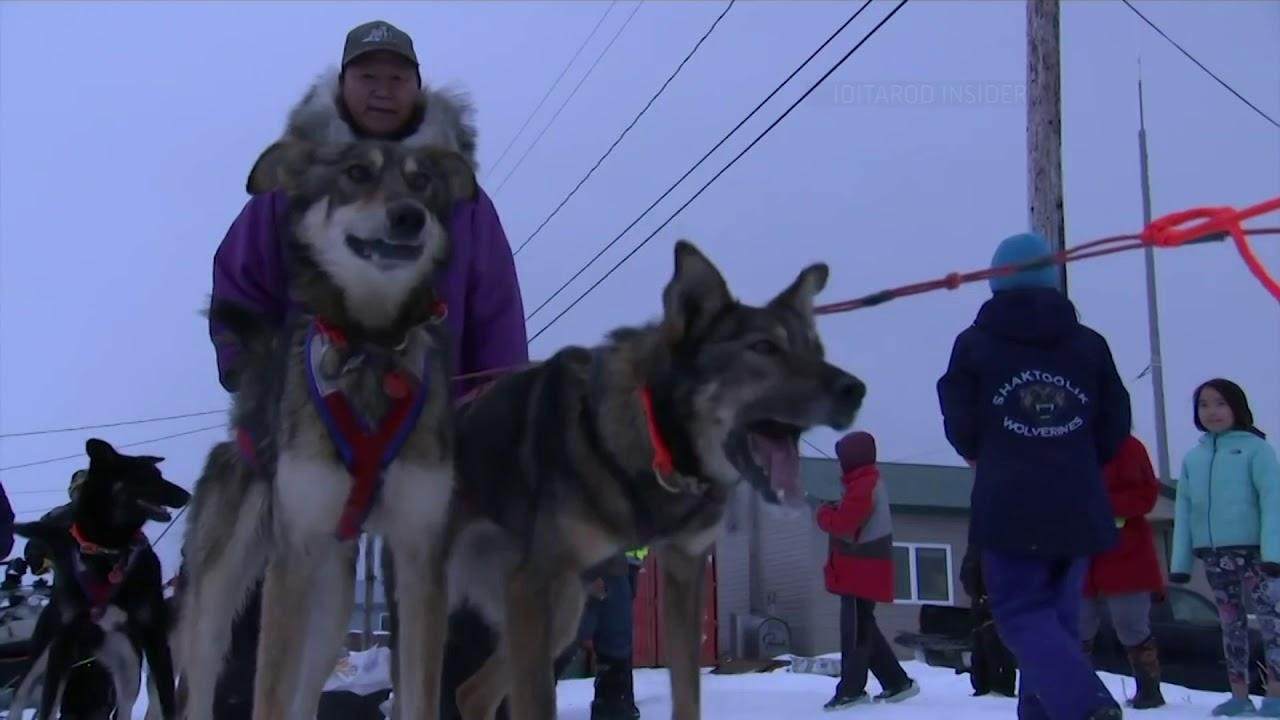 Musher whose dogs all quit Alaska Iditarod race says he didn't run
