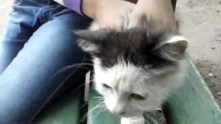 Как говорят коты прикол