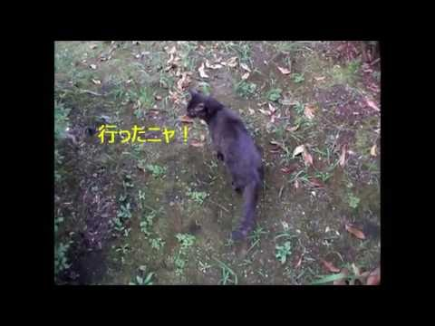 公園で犬から逃げる猫 The cat which escapes from the dog