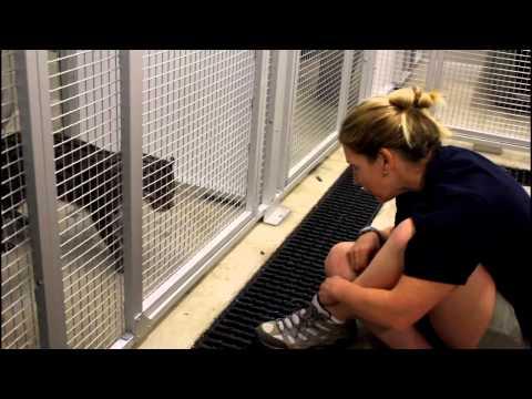 Triad Careers: On the Job with animal curators