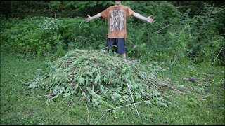 How To Control Giant Ragweed & Rid It From Your Property or Farm