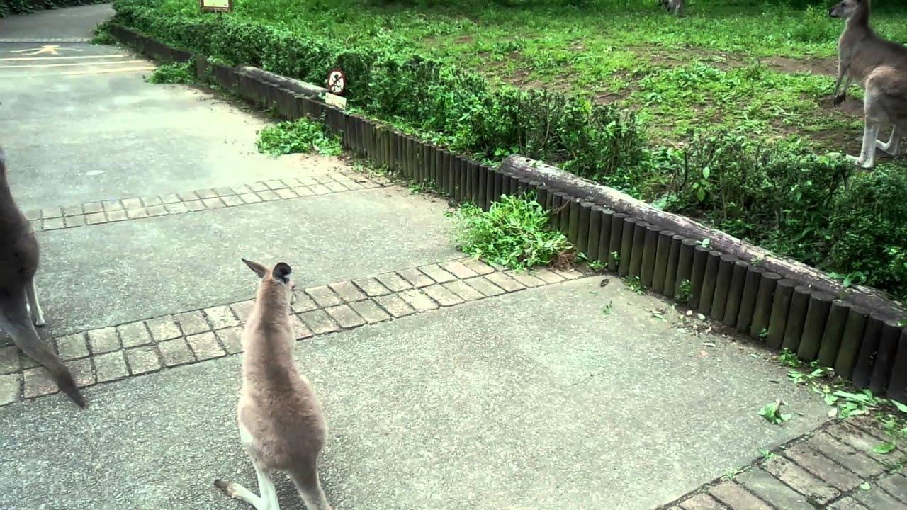 こども 公園 埼玉 動物 自然