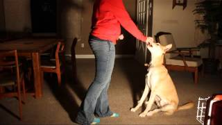 Teach A Deaf Dog To Stay