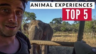 Our Best 5 Animal Experiences In 7 Years Of Travel | Refried Beans 1