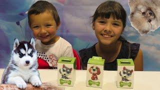 Свит Бокс ! Sweet Box ! Пушистики Коробочки Сюрпризы Обзор Распаковка Игрушек Видео для детей
