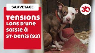 Tensions lors d'un sauvetage de chiens à Saint-Denis