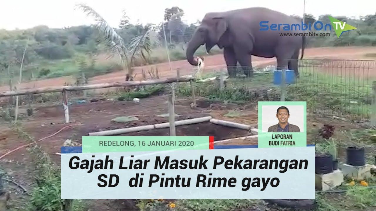 Ratusan Murid TK Dan SD Ikut Lomba Mewarnai Serambi Indonesia