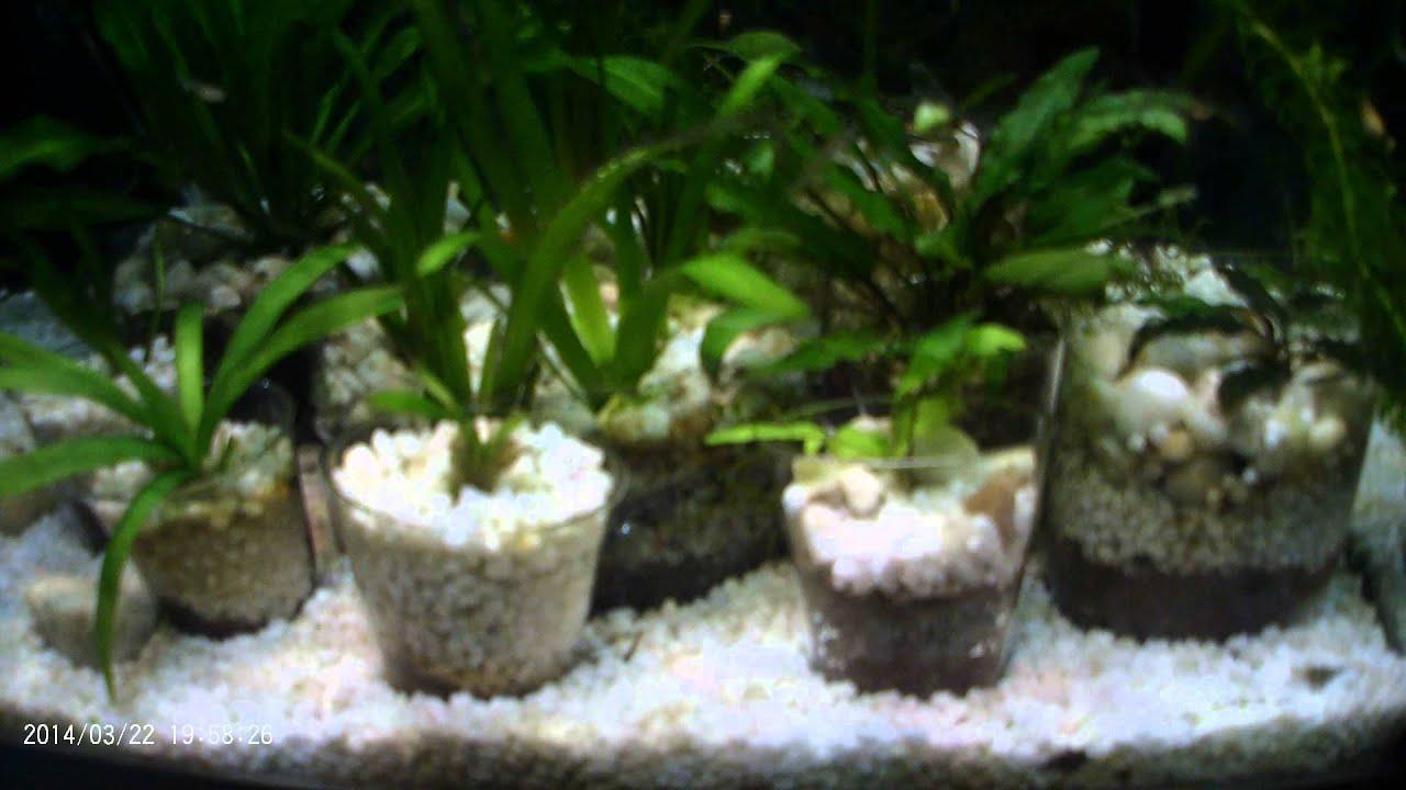 Led lampe mosfet aquarium arduino led driver with optokoppler led lampe mosfet aquarium arduino led driver with optokoppler parisarafo Images