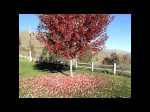 Dirty Projectors - How Many Times will My Leaves Come Down
