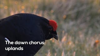 How to…Listen to the upland dawn chorus