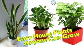Here Are 22 Super Easy House Plants Anyone Can Grow