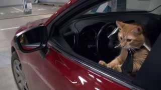 Коты захватывают офис на Всемирный день животных