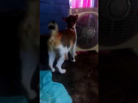Detik detik kucing  menangkap burung