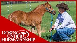 Clinton Anderson: Foal Training  Downunder Horsemanship