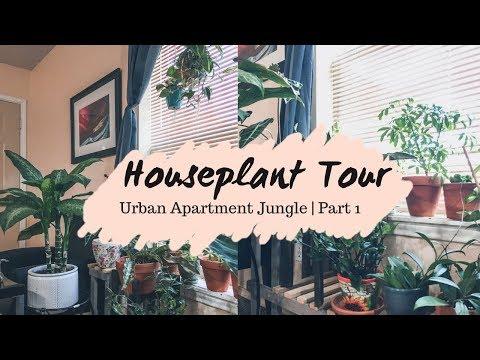Houseplant Tour Part 1 | Low Light Urban Jungle of 100+ Plants