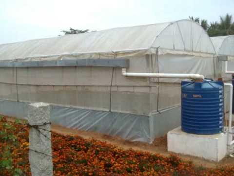 Polyhouse Rainwater Harvesting Youtube