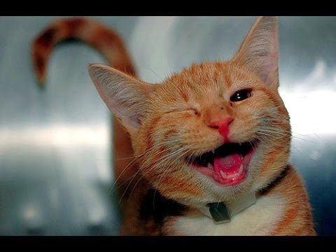funny cat videos  try not to laugh or grin [for kids] - funny cat videos compilation 2016