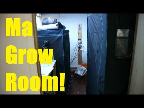 Download NOUVELLE SÉRIE EXCLUSIVE DE JIMBO??!! PETIT TOUR DE MA GROW ROOM!