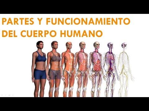 partes-y-funcionamiento-del-cuerpo-humano-1-2