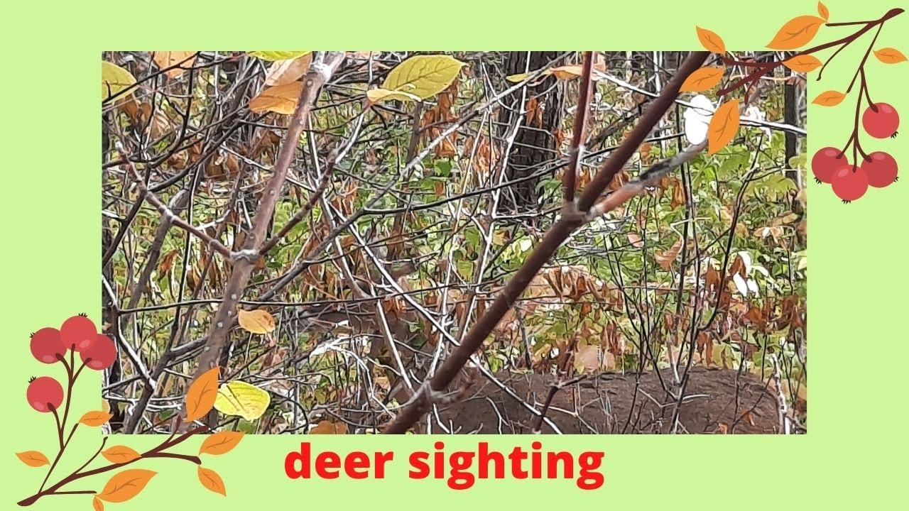 Download Finding Bambi...