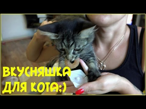 Поведение кошки -