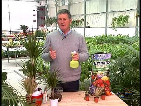 El jardinero en casa dr cenas youtube for Jardinero en casa