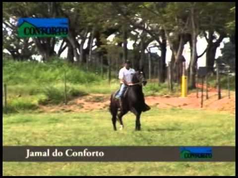 HINDI KAFÉ CAVALO MARCHA PICADA CAVALOS HELIO ROCHA from YouTube · Duration:  40 seconds