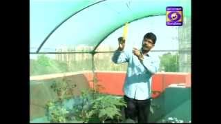 organic terrace garden at coimbatore - dd podhigai nalamdhana