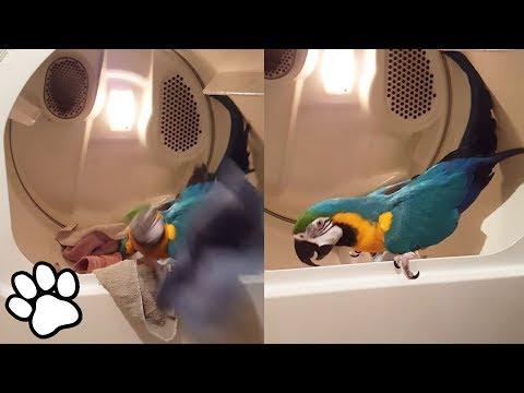 101 Funny Animal Videos | Animal Compilation | That Pet Life