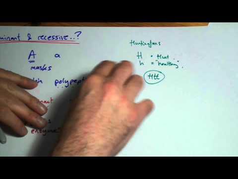 A2 Genetics: dominant or recessive?