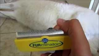 Siberian Husky Grooming