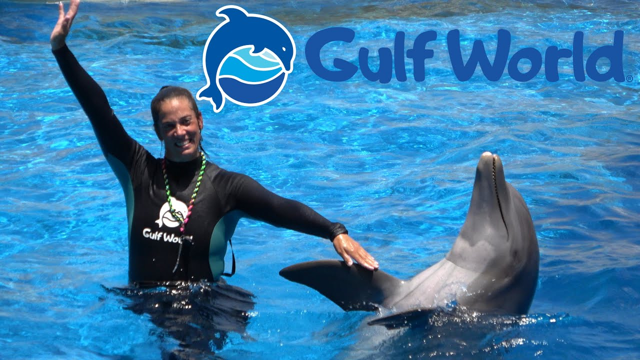 Dolphin Show at Gulf World in Panama City Beach