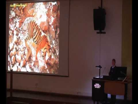 Tiger Conservation into the 21st Century