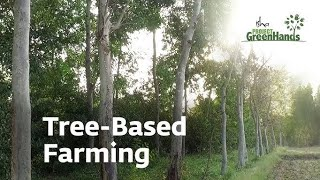 Agro Forestry   Tree-Based Farming   Trees for Life   Project GreenHands