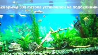 аквариум 300 литров на подоконнике(мой домашний аквариум 300 литров ,в обычной угловой квартире установлен на подоконник., 2016-05-18T04:08:26.000Z)