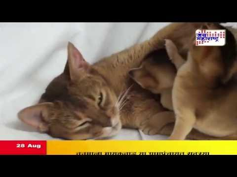 a-cat-adopts-baby-monkey-after-its-mother-rejects-it