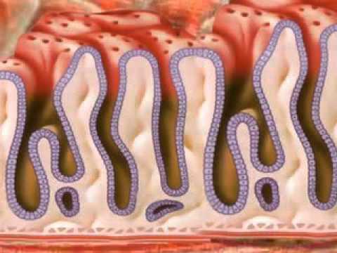Причины болезней. Какую роль играет вода для организма 2 я часть