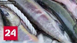 Рыбный запас. Специальный репортаж Артема Кола