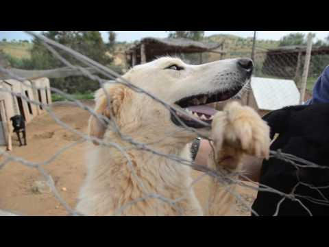 Shelter in Tunisia- featuring Caprice