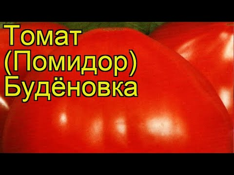 Томат обыкновенный Будёновка. Краткий обзор, описание характеристик Budyonovka